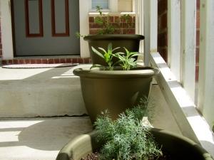 Smaller Herbs